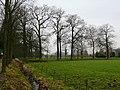 Bornem Bomenrij Kasteel Marnix van Sint-Aldegonde (3) - 193190 - onroerenderfgoed.jpg