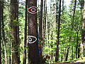 Bosque de Oma (21).JPG