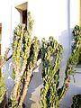 Botanični vrt (3990169479).jpg