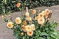 Botanic Gardens In Glasnevin (Dublin) (7951844936).jpg