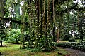 Botanic garden limbe133.jpg