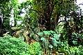 Botanic garden limbe24.jpg