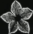 Botanical III.tif