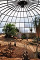Botanischer Garten der Universität Zürich - Kuppel - Innenansicht 2011-08-21 14-02-18.jpg
