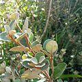 Bouddi National Park - Flora.jpg