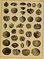 Brachiopod genera of the suborders Orthoidea and Pentameroidea (1932) (19786588383).jpg