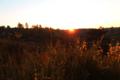 BrachterWald bei Sonnenaufgang03.png