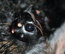 Tarantulas Theraphosidae Details Encyclopedia Of Life