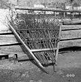 Brana s črnim trnjem, Markovščina 1955.jpg