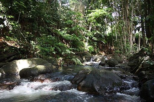 Brandy River, Dominica 002