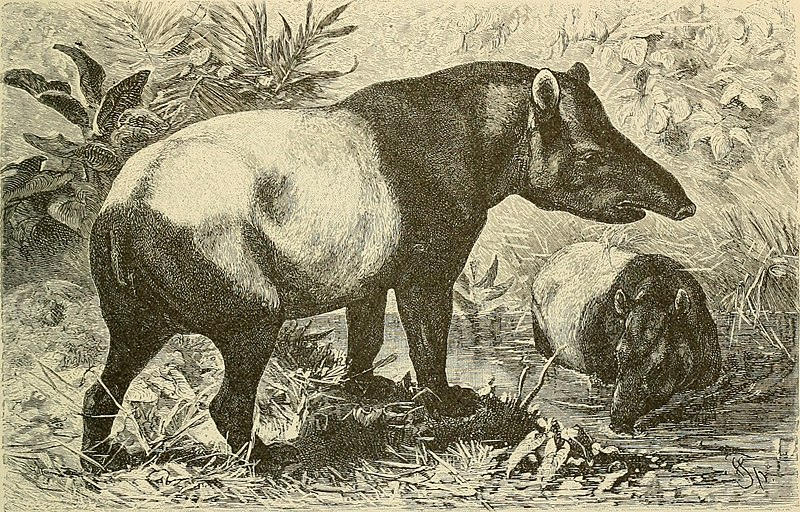 File:Brehm's Life of animals - a complete natural history for popular home instruction and for the use of schools (1895) (20225143400).jpg