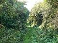 Bridleway to Winterbourne Monkton - geograph.org.uk - 970909.jpg