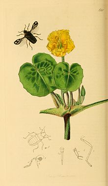 British Entomology Volume 7 (John Curtis) Plate 681.jpg