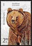 Brown-Bear-Ursus-arctos.jpg