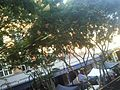 Brunswick St Mall from 2nd Floor - panoramio - figaj.jpg