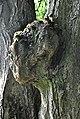 Buchach-Gnizdo-lyp-n2-14070898.jpg