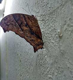 Butterfly hostel 01.jpg