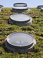 CA Academy of Sciences Living Roof 5.JPG