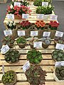 Cactus in Festival.jpg