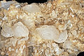 Calcite, quartz 300-4-1335.JPG