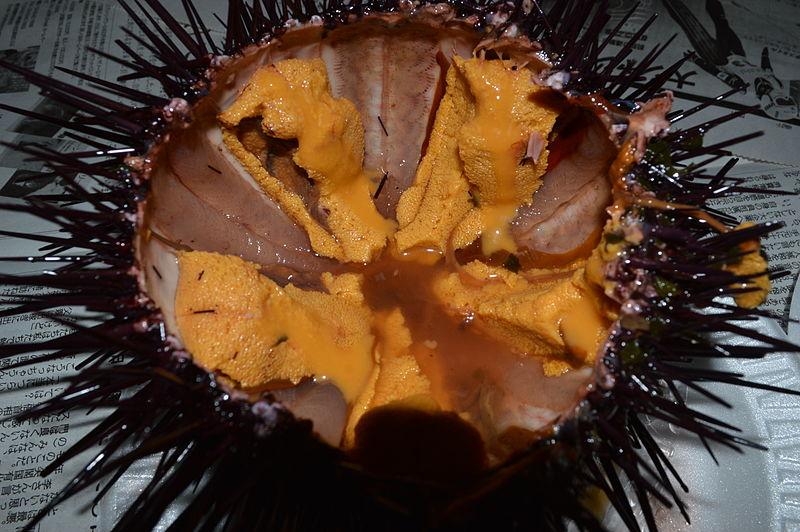 File California Sea Urchin 05 Redondo Beach Ca 20140215 0179 Jpg Wikimedia Commons