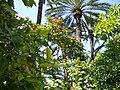 Calpe maryvilla - panoramio (1).jpg