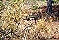 Camaleón 2.jpg