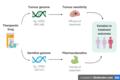Cancer pharmacogenomics.png