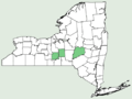 Carlina vulgaris ssp vulgaris NY-dist-map.png