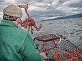 Catch of King Crab.jpg