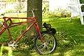 CeI 17 - Mi bici (13646667403).jpg