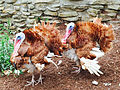 Cedar Point animal farm turkeys (2886).jpg