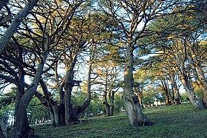 Al Shouf Cedar Nature Reserve - Cedar forest inside the reserve