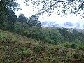 Centro, Cd de Tetela de Ocampo, Pue., Mexico - panoramio.jpg