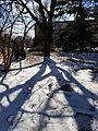 Chadwick Arboretum (32632647195).jpg