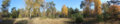 Chernobyl Exclusion Zone forest panorama.png