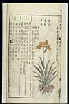 Chinese Materia medica, C17; Plant drugs, Blackberry lily Wellcome L0039344.jpg