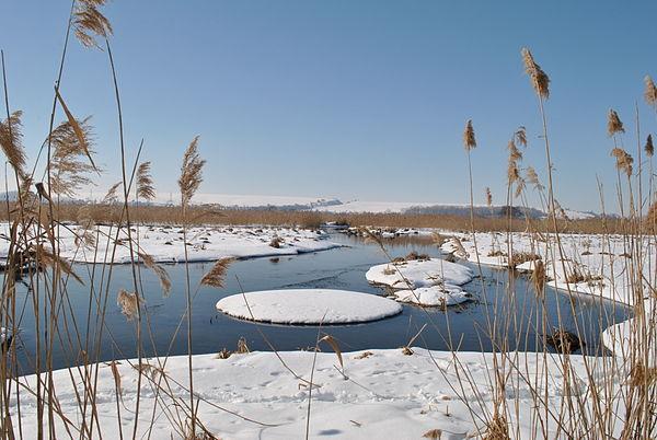 Чистилівський орнітологічний заказник. Зимовий вид на річку Серет поблизу Чистилова, © Микола Василечко, CC-BY-SA 3.0