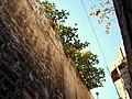 Citrus medica, Ayda alley, Aleppo.jpg