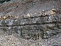 Claystone over dolostone over limestone (Cave Branch Member over Mill Knob Member, Slade Formation, Upper Mississippian; Clack Mountain Road Outcrop, south of Morehead, Kentucky, USA) (45572038814).jpg