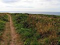 Cliff Path - geograph.org.uk - 216999.jpg