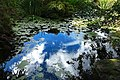 Clouds reflected in a pond at VanDusen (29682502640).jpg