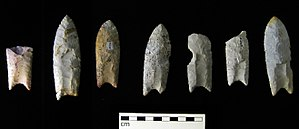 Clovis culture - Clovis points from the Rummells-Maske Cache Site, Iowa.