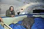 Coast Guard, animal rescue teams to transport pregnant manatee to Florida following rescue from cold Massachusetts waters (2).jpg