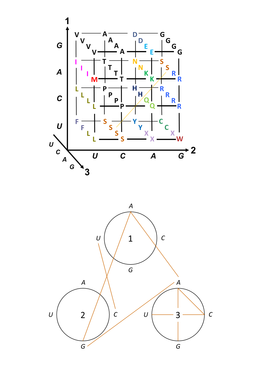 Code, S-Connections, Space-Time Manifolds