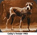 Colby's Twister won for Colby on November 19, 1906, when he defeated Parson's Jim Big Boy in 42 min. at Boxford, Mass.jpg