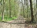 Colliersley Wood (geograph 3504393).jpg