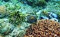 Colorful underwater world, Mabini Batangas - panoramio (2).jpg