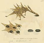 Coloured Figures of English Fungi or Mushrooms - t. 316.jpg