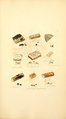 Coloured Figures of English Fungi or Mushrooms - t. 375.png
